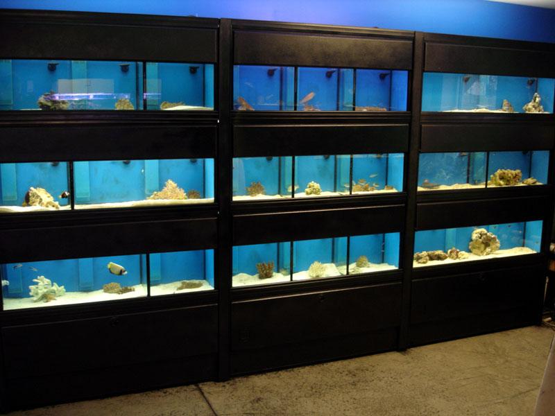 Advice on aquarium racks the planted tank forum for Fish tank rack